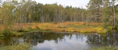 Bauernhofurlaub Oberpfälzer Wald Ausflugsziele Kulzer Moos