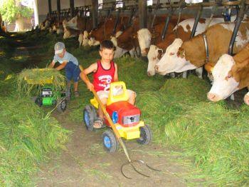 Urlaub auf dem Bauernhof Kühe füttern