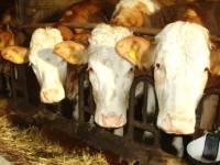 Bauernhofferien in Bayern - Familienurlaub, Wanderurlaub, Reiturlaub oder Herbsturlaub