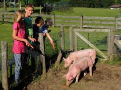 Bauernhofurlaub Berchtesgaden Schweine füttern
