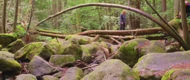 Ferienwohnungen im Bayerischen Wald - Wanderurlaub Höllbachtal