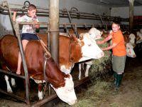 Erlebnisreisen Bayerischer Wald Kühe am Bauernhof