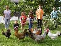 Familienurlaub Bayern am Bauernhof Hühner füttern