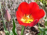 Ferienzeiten Saison Frühlingsblume