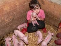 Bauernhof für Kinder Ferkel streicheln