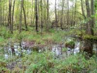 Ausflugsziel Oberpfälzer Wald Naturdenkmal Kulzer Moos